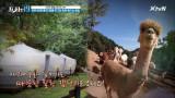 동물 친구 '알파카'와 함께 즐기는 캠핑!! [전국 캠핑 여지도 19]