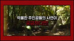 [FLEX데이] '누명 소재 한국 영화' 연속방송