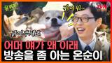 유퀴즈 EP.46 초면에 배를 발라당~ 카메라 낯가림 전혀 없는 애교쟁이 온순이! 이름값 제대로 하네?? #tvNSTORY