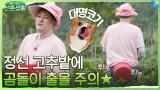 고추밭에 나타난 예능 곰돌이! (feat. 치명적인 대명코기의 뒷태)